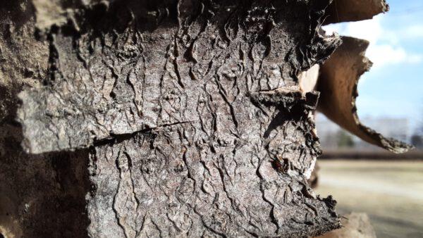 نقد و بررسی دوربین سامسونگ گلکسی A51